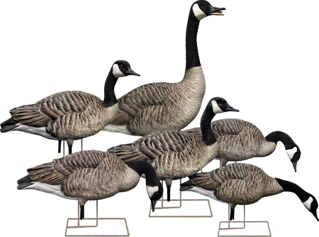 Avian-X AXP Goose Decoy Fusion Pack – 6 Pack