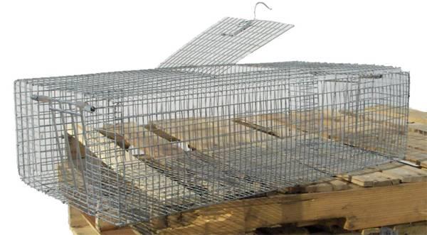 Scott Pet Small Double Door Pigeon Trap product image
