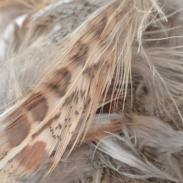 Perfect Hatch Hungarian Partridge Plumage product image