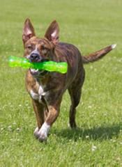 Hyper Pet Dura-Squeaks Medium Stick product image