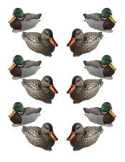 Cupped 12 Pack Finishing Mallards Duck Decoys product image