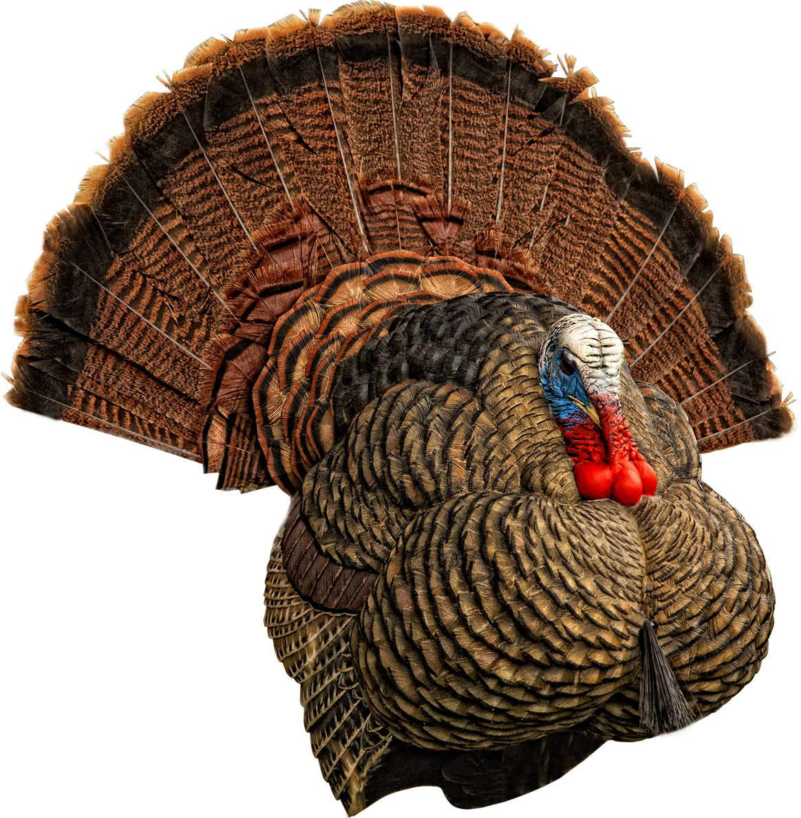 Avian X LCD Strutter Turkey Decoy thumbnail