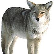 Montana Decoys Kojo Coyote Decoy