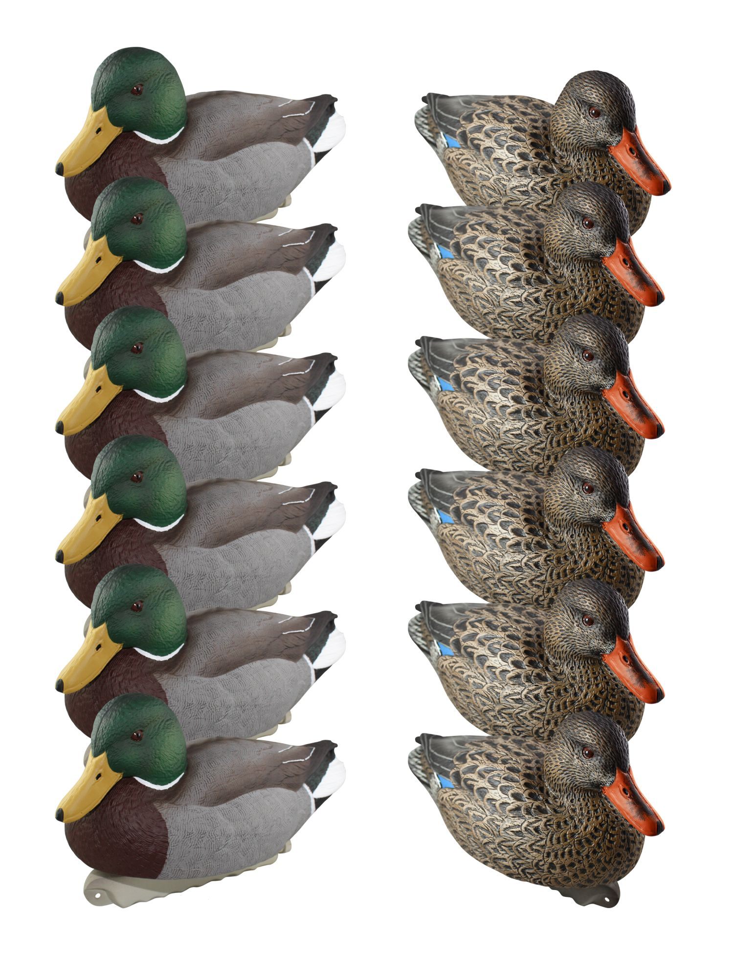 Cupped 12 Pack Finishing Mallards Duck Decoys