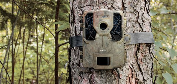Track the Big One for Less - Game Cameras Under $100